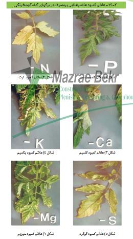 افات و بیماریهای گوجه گلخانه ای 3 گوجه فرنگی گلخانه ای – کاشت ، داشت ، برداشت ، صادرات گوجه فرنگی گلخانه ای – کاشت ، داشت ، برداشت ، صادرات                                                           3