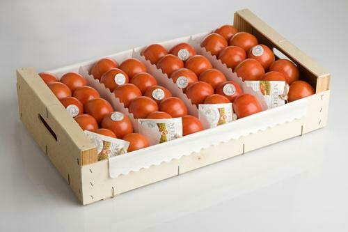 کشت گوجه فرنگی در گلخانه گوجه فرنگی گلخانه ای – کاشت ، داشت ، برداشت ، صادرات گوجه فرنگی گلخانه ای – کاشت ، داشت ، برداشت ، صادرات