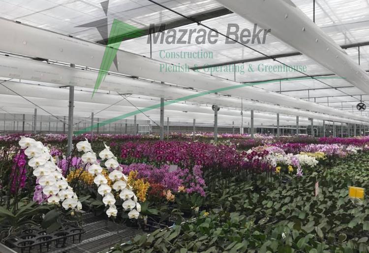 گل شاخه بریده مزرعه بکر سرمایه لازم ساخت گلخانه سرمایه لازم ساخت گلخانه