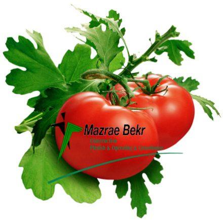 گوجه فرنگی گلخانه ای – کاشت ، داشت ، برداشت ، صادرات گوجه فرنگی گلخانه ای – کاشت ، داشت ، برداشت ، صادرات                    44 e1518082104743