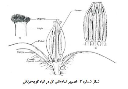 گل گوجه فرنگى گلخانه ای گوجه فرنگی گلخانه ای – کاشت ، داشت ، برداشت ، صادرات گوجه فرنگی گلخانه ای – کاشت ، داشت ، برداشت ، صادرات Screenshot 2018 1 8 nashrieh fani No2 88 9 22 indd                     pdf