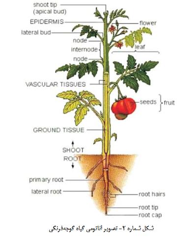 گوجه فرنگی گلخانه ای – کاشت ، داشت ، برداشت ، صادرات گوجه فرنگی گلخانه ای – کاشت ، داشت ، برداشت ، صادرات Screenshot 2018 1 8 nashrieh fani No2 88 9 22 indd                     pdf1